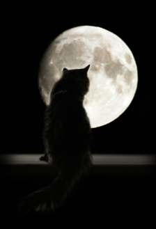 Black Cat w Moon